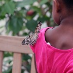 A Paper Kite butterfly landed on a little girl's shoulder.